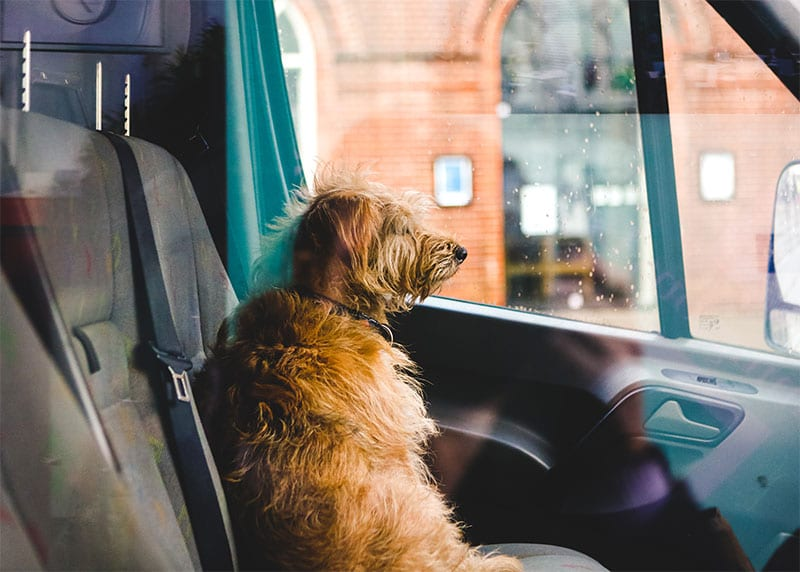 dog waiting for own to talk to car hail damage repair specialists
